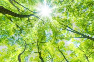 特長2 木から得られる効果を最大限利用した家づくり
